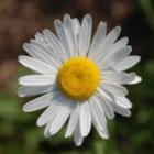 daisy Schrandt